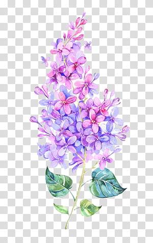 Warna Pink Bunga Ungu, Bunga Cat Air, lukisan bunga lilac biru dan pink png
