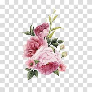 Centifolia roses Bunga pink Undangan pernikahan Bunga pink, HD cat air mawar yang dilukis dengan tangan, ilustrasi bunga merah muda png