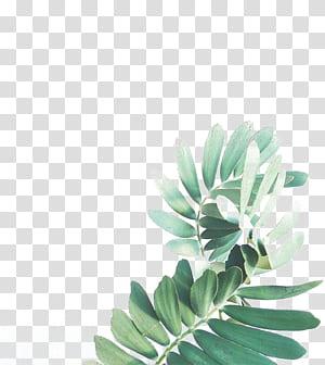 Lukisan Cat Air Daun Arecaceae, Cat Air Daun, daun hijau png
