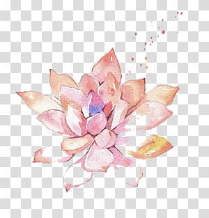 ilustrasi tanaman sukulen merah muda, lukisan Cat Air Bunga, daging Cat Air png