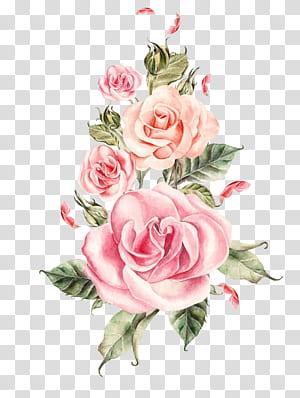 Bunga Mawar Pernikahan, Buket mawar merah muda yang dilukis dengan tangan, ilustrasi mawar merah muda png
