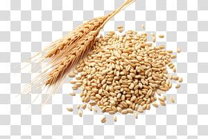 biji-bijian gandum, minyak gandum Gandum Atta tepung Sereal gandum Gandum berry, gandum png