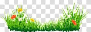 , Bunga dengan Rumput, aster putih, kuning, dan merah di bidang rumput png