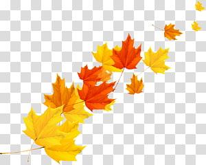 daun maple kuning, oranye, dan coklat, Daun maple Autumn, maple leaf Autumn PNG clipart