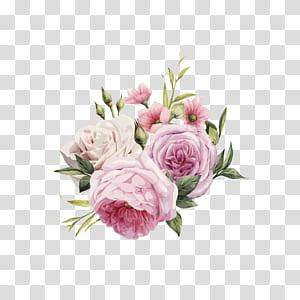 Bunga merah muda Mawar Warna, mawar HD cat air yang dilukis dengan tangan, mawar merah muda dan putih png