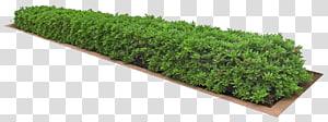 tanaman hijau, Menanam Ikon grafis komputer 3D, Rumpun rumput png