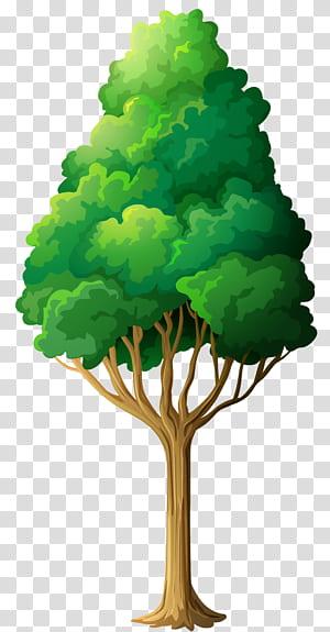 , Green Tree, ilustrasi pohon berdaun hijau png