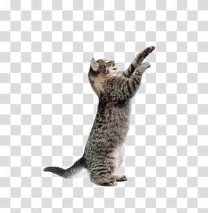 kucing kucing coklat, Kucing Anjing Mainan Hewan Peliharaan Kucing, kucing lucu png