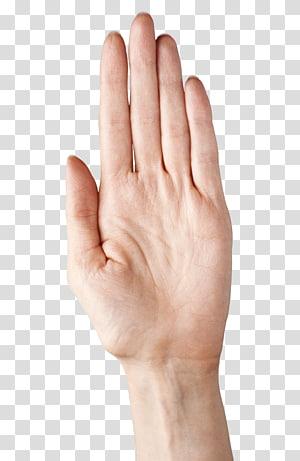 telapak tangan kiri manusia, model Tangan Jempol Tangan Atas Jempol, Tangan Menampilkan Lima Jari PNG clipart