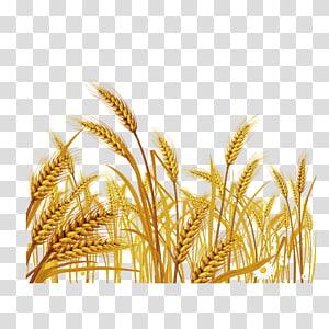 ilustrasi yellow grain, ilustrasi Wheat Euclidean, Harvest harvest png