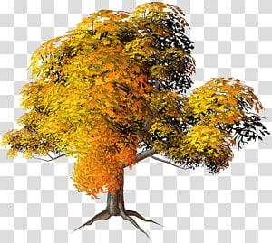 Pohon Musim Gugur, Pohon Kuning Besar, Pohon berdaun kuning dan oranye PNG clipart