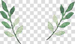 Cat air daun, dua ilustrasi tanaman merambat hijau PNG clipart