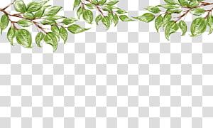 lukisan daun hijau, Lukisan Cat Air Daun Cymbopogon citratus, daun Cat Air png