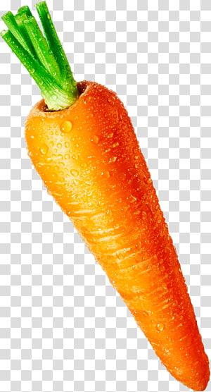 wortel, Jus Bayi wortel Masakan vegetarian, wortel png