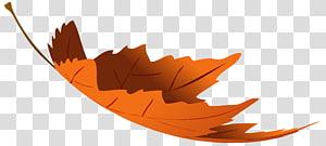 ilustrasi daun coklat, warna daun Autumn, Falling Autumn Leaf PNG clipart
