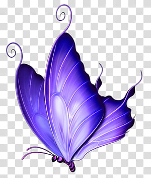 Butterfly Pink, Purple Deco Butterfly, ilustrasi kupu-kupu biru png
