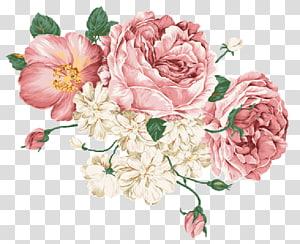 lukisan bunga merah muda dan putih, Bunga Menggambar Desktop desain Bunga, estetika png