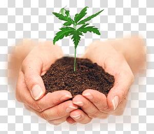 Menanam Bibit Tanah, menanam png