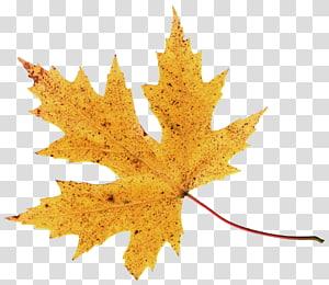 daun coklat, 2017 Nissan LEAF Warna daun musim gugur, Daun Musim Gugur PNG clipart