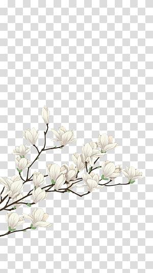 Bunga Putih File komputer, Bunga putih, bunga sakura putih png