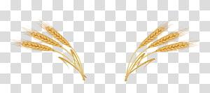 ilustrasi gandum coklat, Telinga Gandum, gandum png