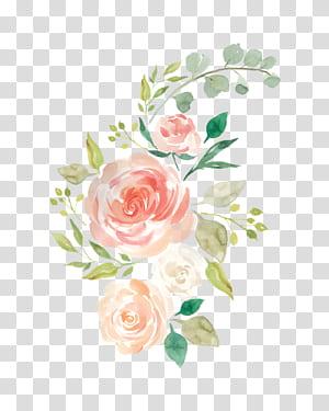 Cat Air Bunga Tempat tidur bayi Lukisan cat air, bunga pastel, mawar merah muda dan putih png