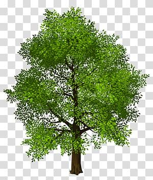 Pohon Hijau, Pohon Hijau, ilustrasi pohon hijau png