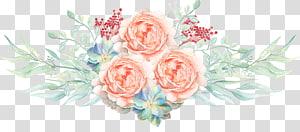 Lukisan cat air Ilustrasi Bunga, Bunga cat air, mawar merah muda png