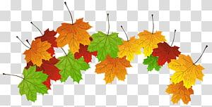 ilustrasi daun maple coklat dan hijau, warna daun Autumn, Fall Leaves PNG clipart