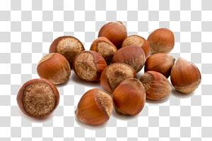 ilustrasi kenari, Hazelnut Food Almond, Acorn png