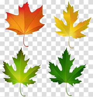 empat daun maple aneka warna, daun Maple warna daun maple Gula, Fall Maple Leaves Set Decorative PNG clipart