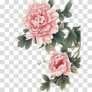 Lukisan Cina, Peony Gongbi Art, peony, ilustrasi bunga peony merah muda png