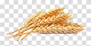 Tepung Atta Tepung gandum utuh Biji Sereal, Gandum emas, gandum kering-matahari png