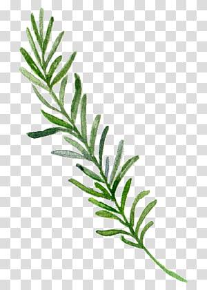 , Tepian daun yang dilukis dengan tangan, ilustrasi daun hijau png