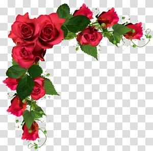Buket bunga mawar, Bunga pernikahan, ilustrasi bingkai mawar merah png