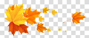 ilustrasi daun maple, Musim Gugur, Deco Fall Leafs PNG clipart