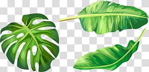 Ilustrasi daun pisang Euclidean, daun hijau yang dilukis dengan tangan, ilustrasi tiga daun hijau png