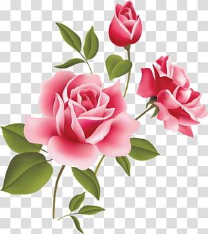 Rose Pink, Pink Rose Art, bunga pink png