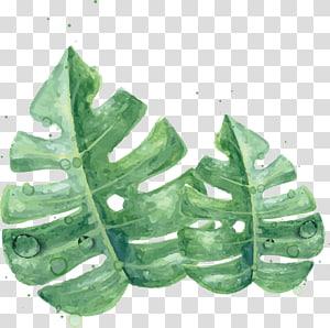 Lukisan Cat Air Daun Kulit Hijau, Daun hijau Cat Air, daun keju twoswiss png