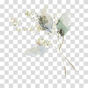 Lukisan Cat Air Seni Bunga Ilustrasi, daun Cat Air, lukisan bunga putih PNG clipart