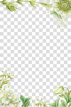Lukisan Bunga, Perbatasan bunga hijau yang dilukis dengan tangan, ilustrasi bunga petaled putih png