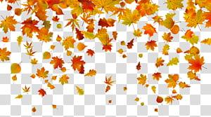 Warna daun musim gugur, Daun Jatuh, ilustrasi daun maple png