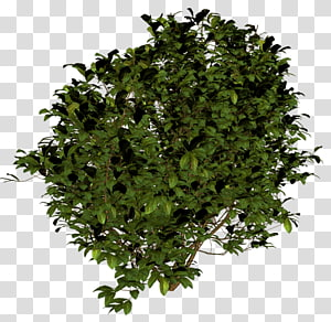 Ikon Semak, Semak, tanaman daun hijau png