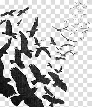 Penerbangan burung penerbangan burung gagak umum kawanan, cat air gagak png
