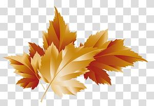 ilustrasi daun coklat, Autumn, Fall Leaves Decor PNG clipart