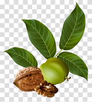 buah dan biji kenari, Walnut Nucule, Walnut png