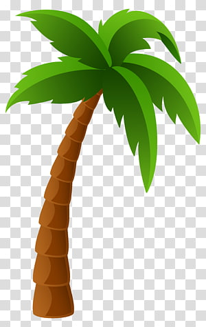 Washingtonia filifera Arecaceae Washingtonia robusta, Pohon Palem, ilustrasi pohon kelapa png