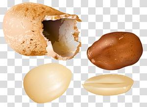 ilustrasi kacang coklat, Peanut Nucule, Peanuts png