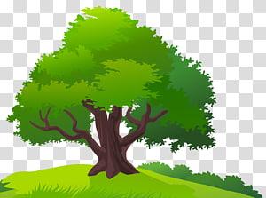 pohon hijau, Rumput Pohon, Pohon dan Rumput png