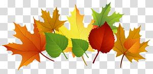 ilustrasi berbagai macam warna daun, warna daun musim gugur, Fall Leaves PNG clipart